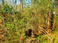 Lots of Overgrown Vegetation...EVERYWHERE!