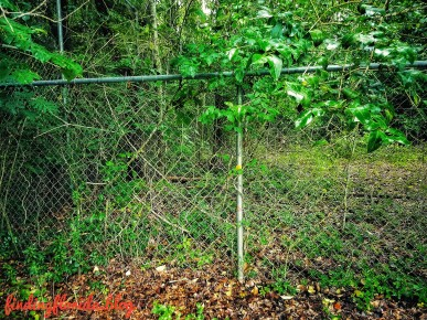 Beyond The Fence...